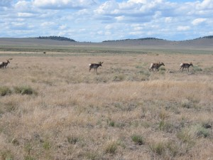 Hart Mountain Antelope Refuge