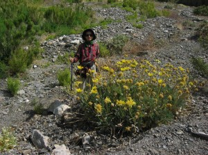 "My mentor next to a Panamint daisy. She's about 5'9""."