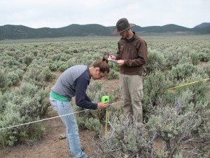 Measuring the height of the sagebrush while Nelson records the data.