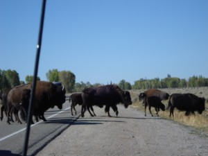 Rush hour in Wyoming