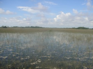 Everglades National Park: The River of Grass