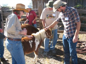 Petting the mini-horses at the Empire Ranch Roundup