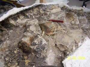 This is the opened jacket, you can see some fossils on top of the sediments.