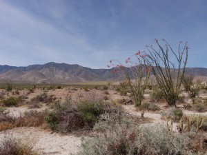View of our desert collection area in McCain Valley.