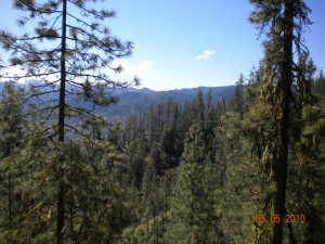 Beatty Creek Research Natural Area, jointly managed by the USFS and BLM, and one of our favorite collection sites