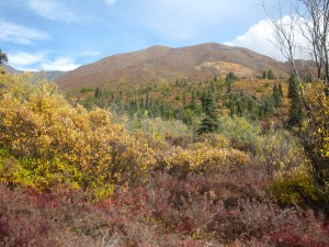 Beautiful fall colors in Alaska