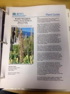 Information about Basin Wildrye. Courtesy of NRCS.