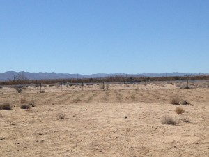 "the ""Joshua Tree"" common garden site after we finished planting!"