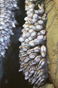 0214_icebergpt_barnacles