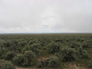 The sagebrush landscape