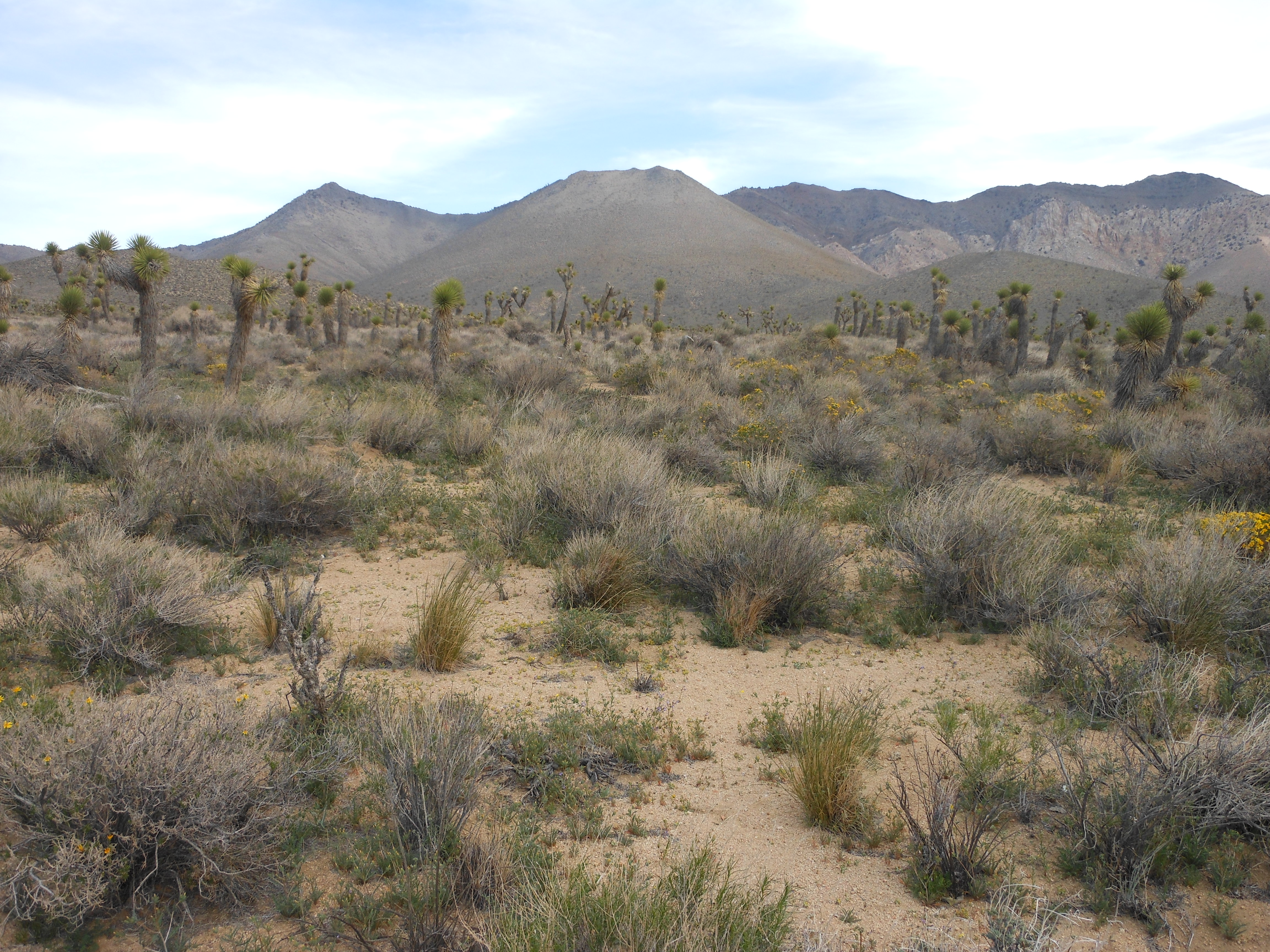 Owens Peak Wilderness