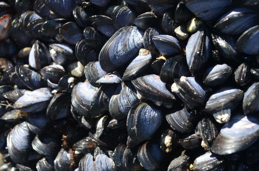 Patos_mussels_07_14