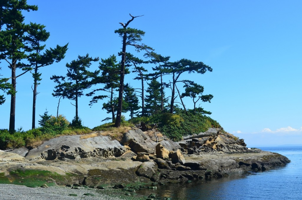Patos_oak_headland_07_14