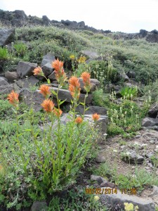 Castijella spp. at Wildhorse Lake. Courtesy Ariana Gloria-Martinez.