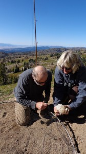 We helped Bruce Haak and BLM Wildlife Biologists Jill Holderman in building a raptor trapping station for banding during the migration. He we caught a juvenile Coopers Hawk in a bow net.