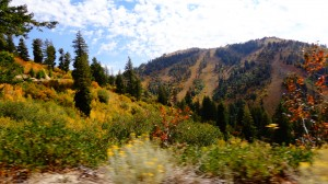 One of our collection sites is up on Bogus Basin--a popular ski resort just outside of Boise. Seeing these fall colors and ski slopes just puts a little extra pep in my step!