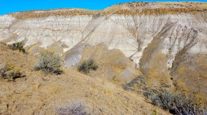The complex geologic history of Idaho is seen everywhere. The grey patch in the center is where we hiked in to do our plantings to increase native pollinators to the area