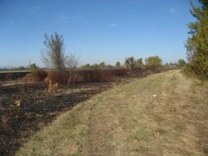 Post fire site walk_2014 (11)