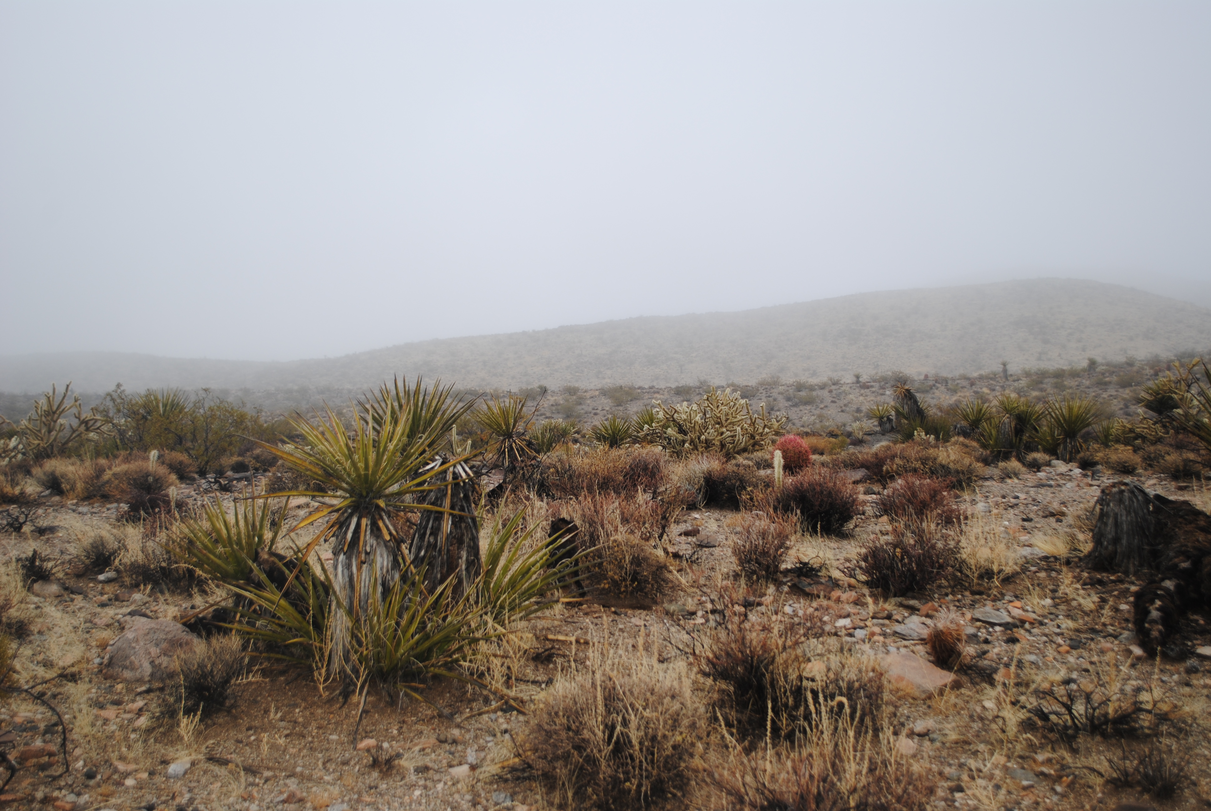 Is that fog? In the desert? Why yes it is. It's winter here, and it's been raining.