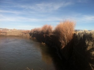 Bank stabilization using willows on TNC property