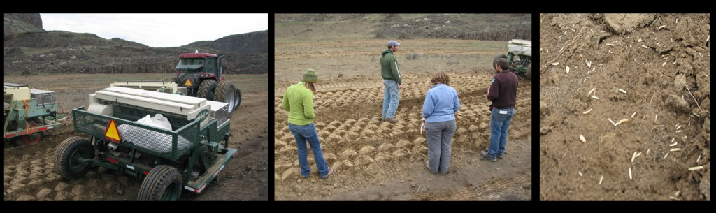 The till and seeding process