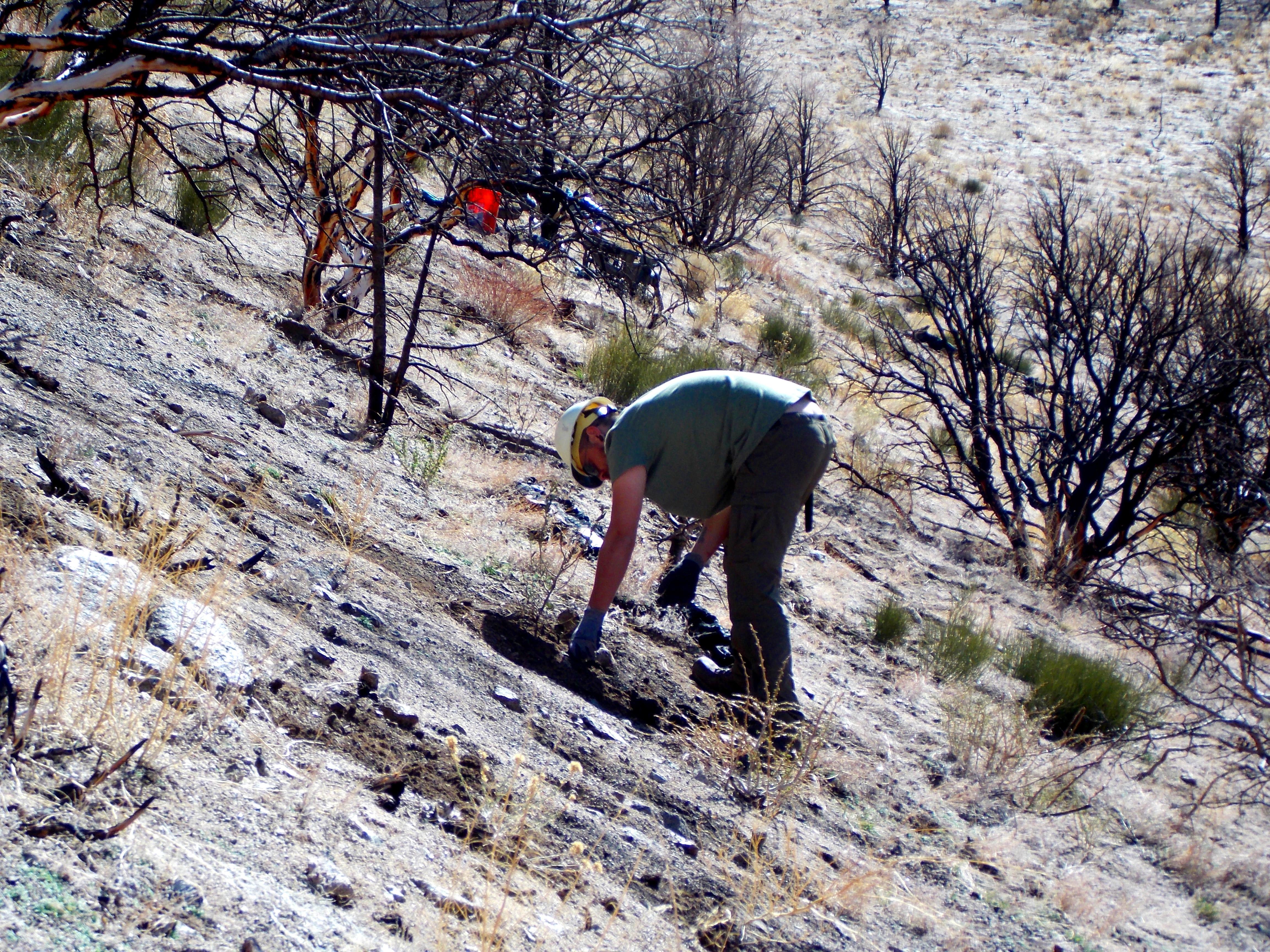 John White planting Mountain Mahogany.