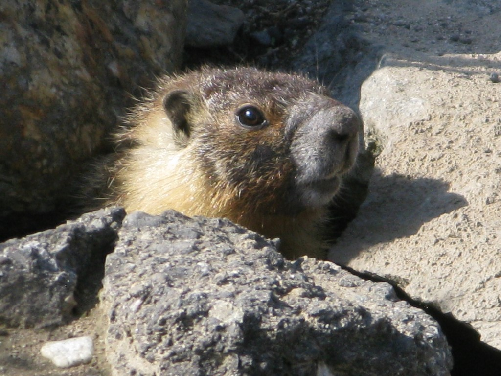 A local marmot sends her regards.