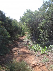 A trail through the chaparral at Pine Hill Preserve