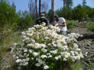 Ryan and I admiring Rhododendron occidentale