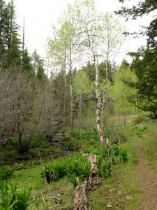 Sisley Creek