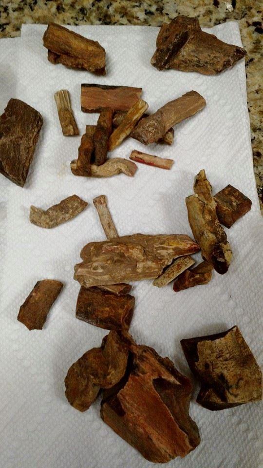 Petrified wood and limb casts from the Saddle Mountains!! \(O_O\)