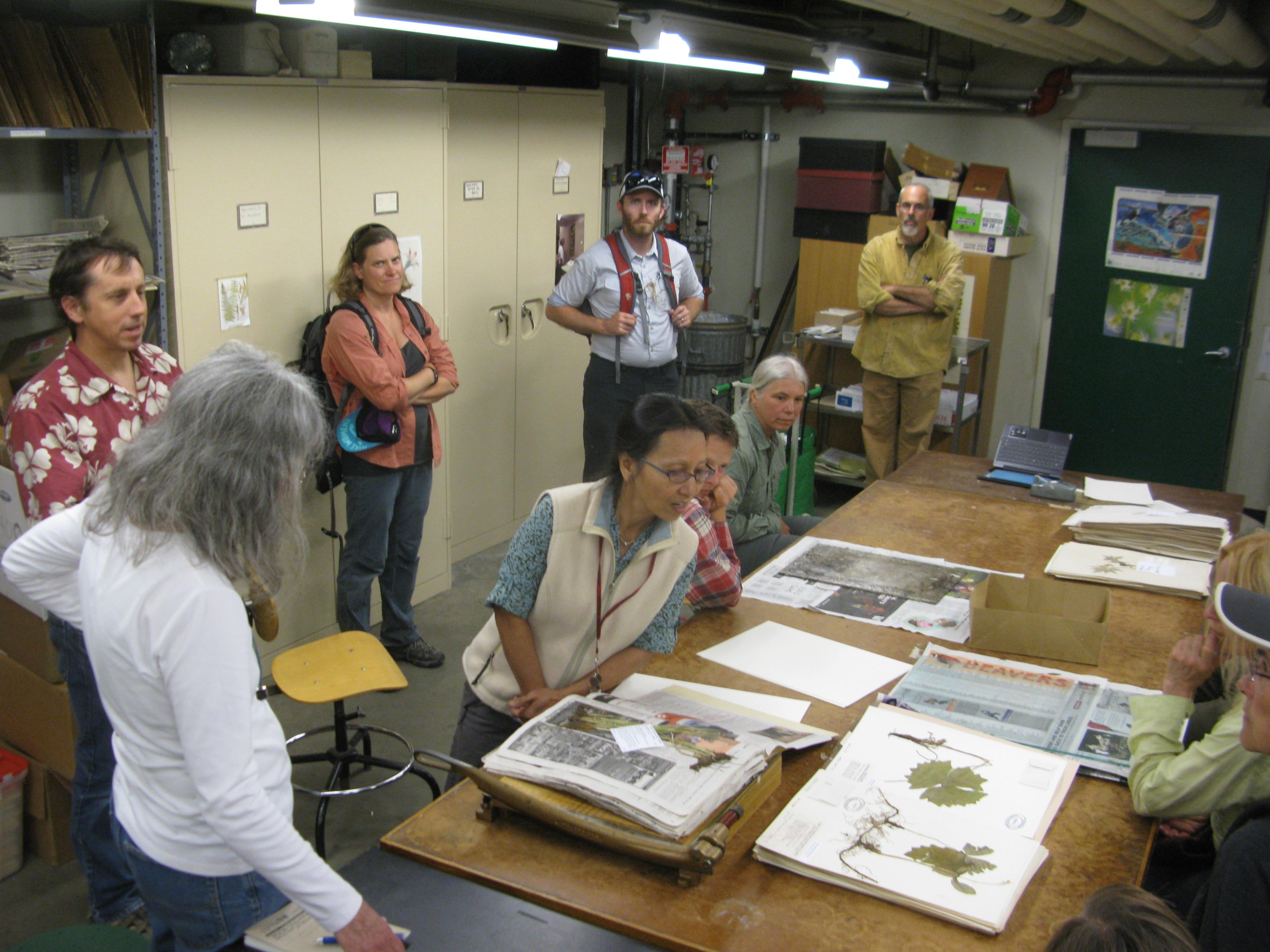 Looking at some herbarium specimens.