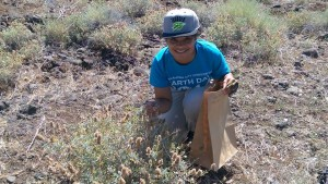A picture of me at my first ever plant collection, purple sage. It's a very fragrant plant!
