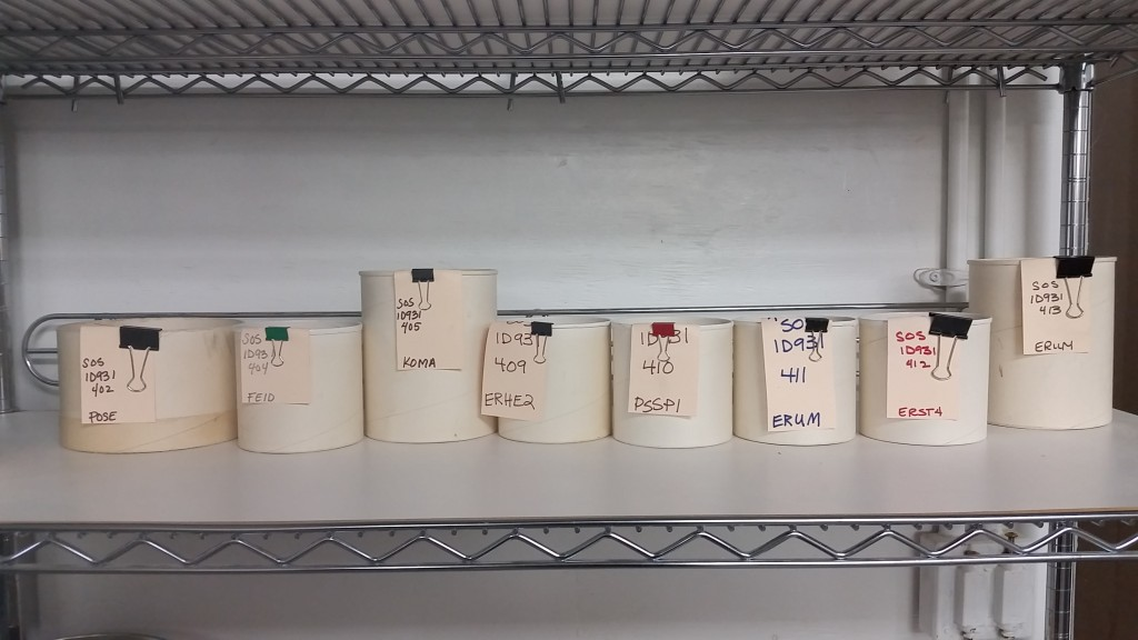 Samples of seed collections from our field office last summer