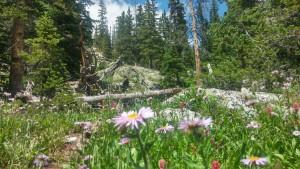 Trail to Mohawk Lake
