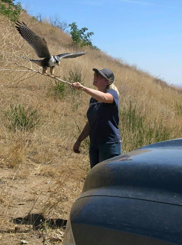 Jenny taming a photoshopped Peregrine falcon.