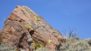 groovy lichen