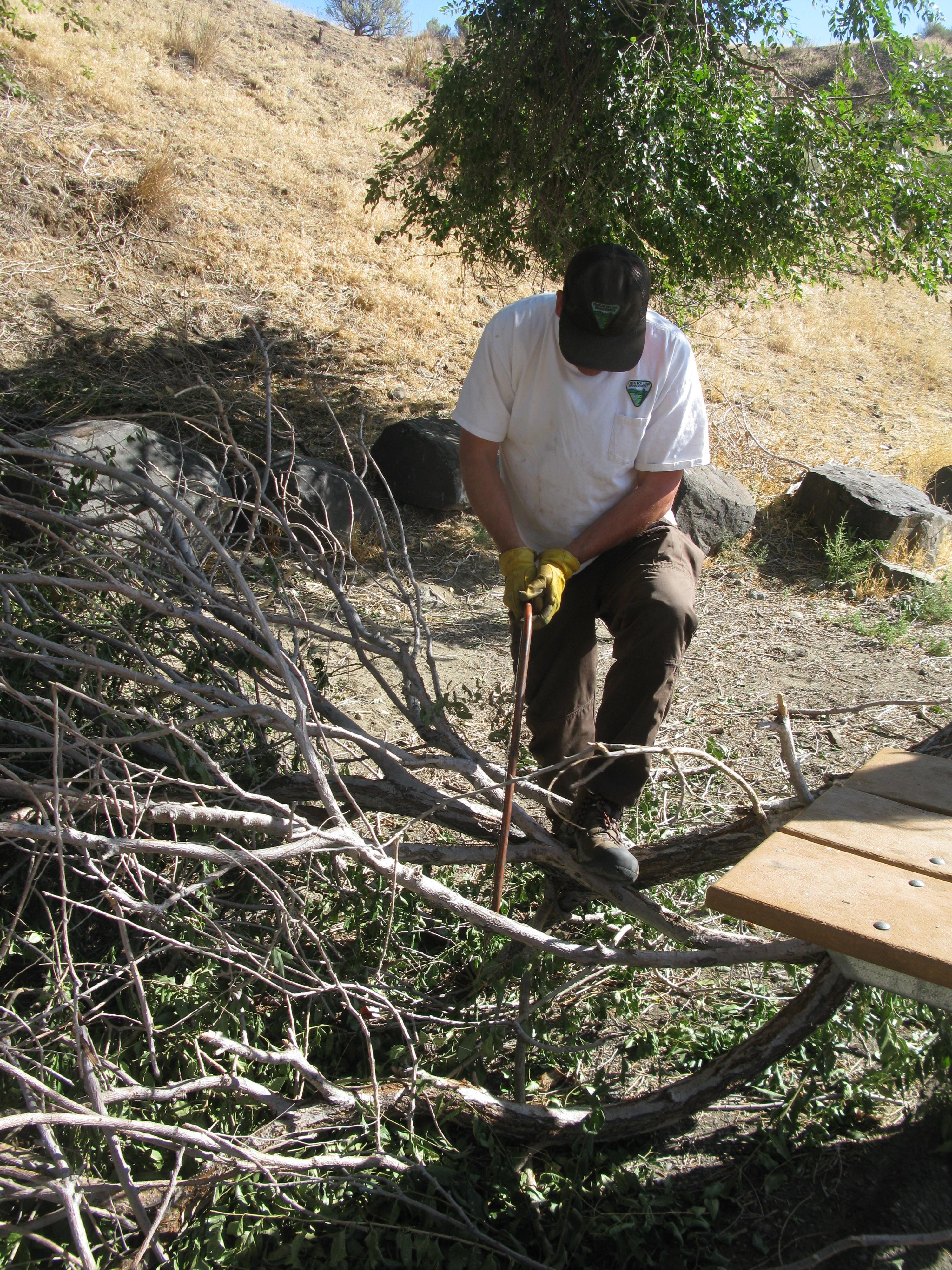 Rusty cutting down a fallen elm tree branch.