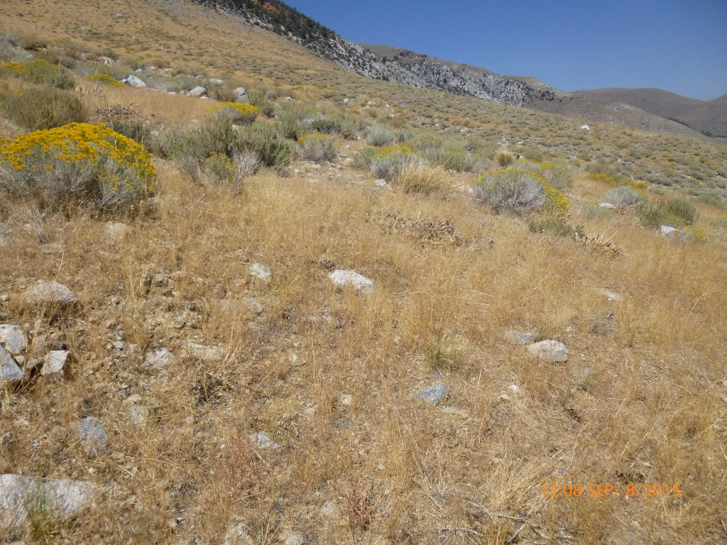 Here's another area that burned in 2003. You can see that some shrubs are growing here, b