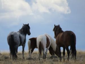 Wild Horse Monitoring