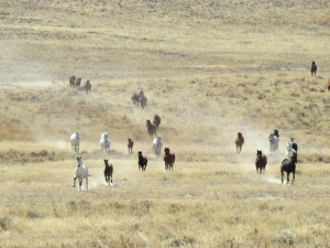 A group of about 35 wild horses charged me in the field.