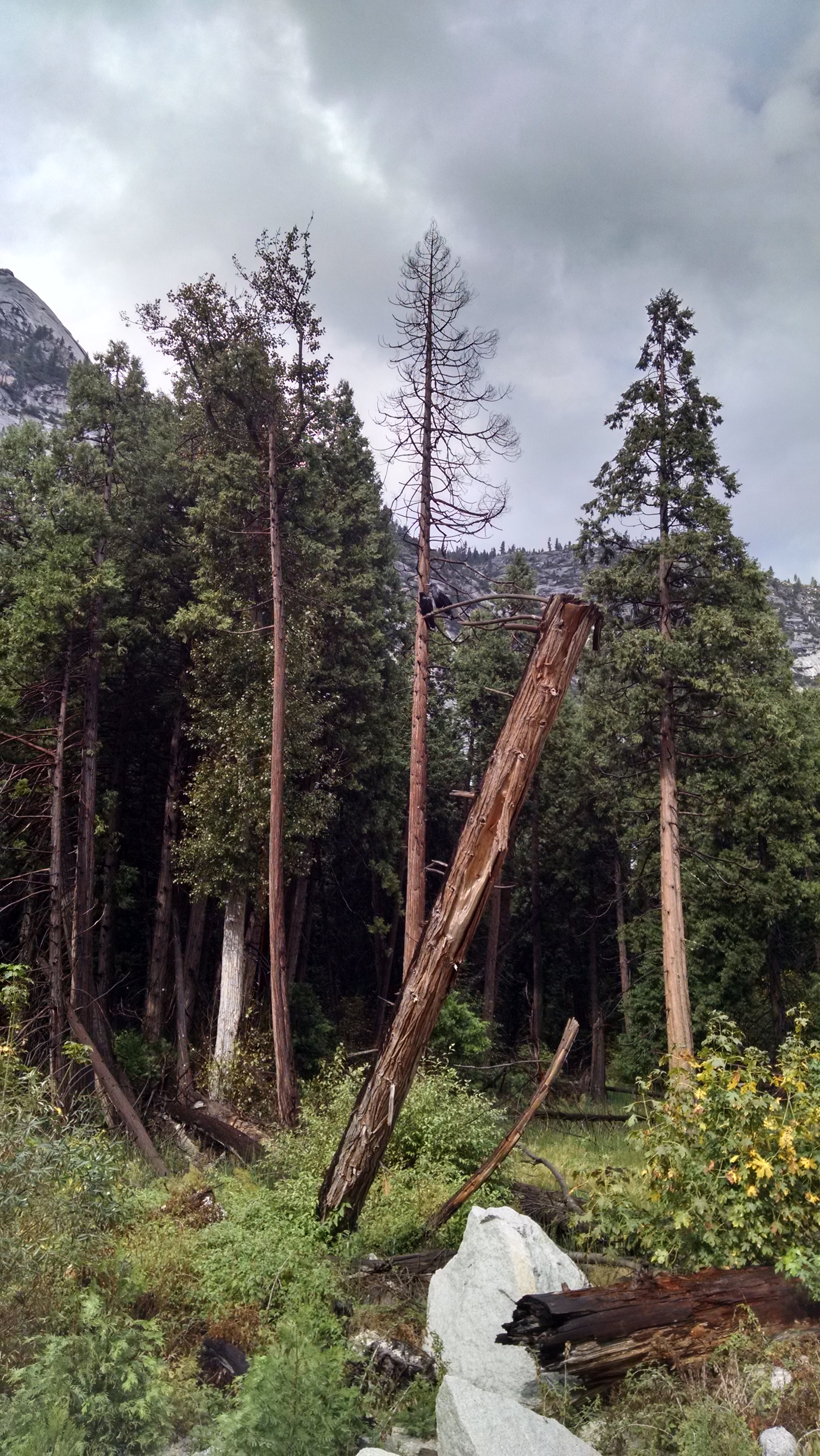 A pair of ravens after a storm in Yosemite Valley