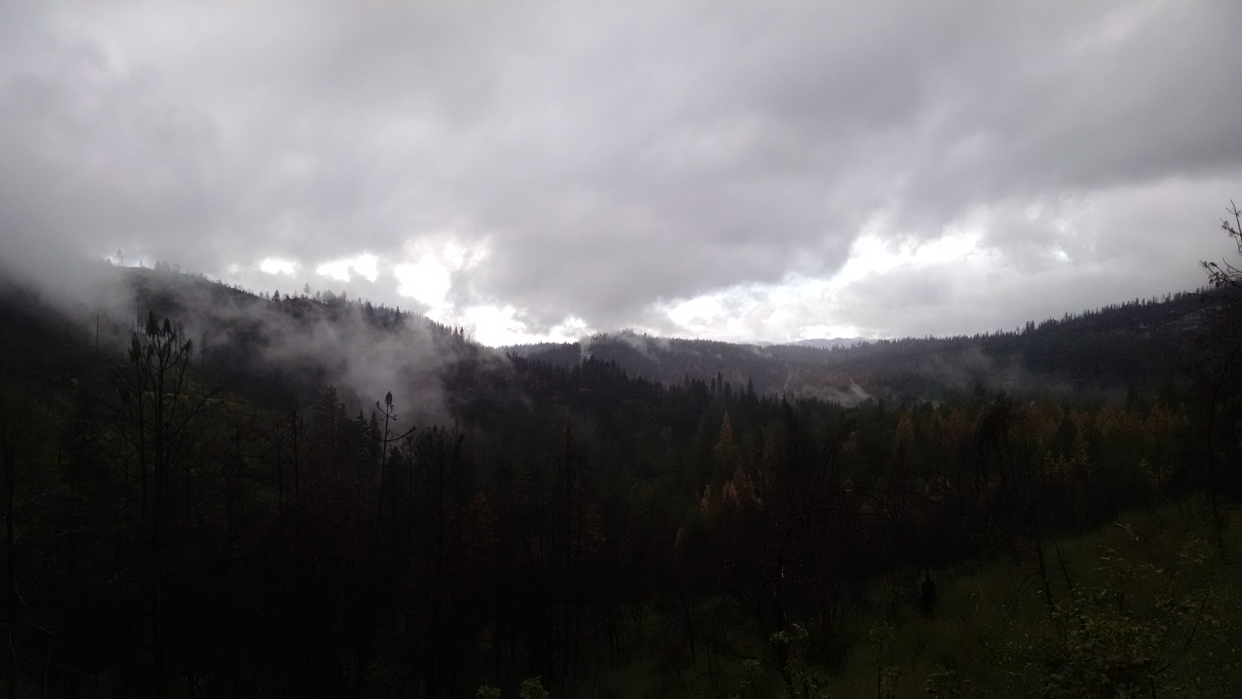 An overcast day on the Stanislaus National Forest