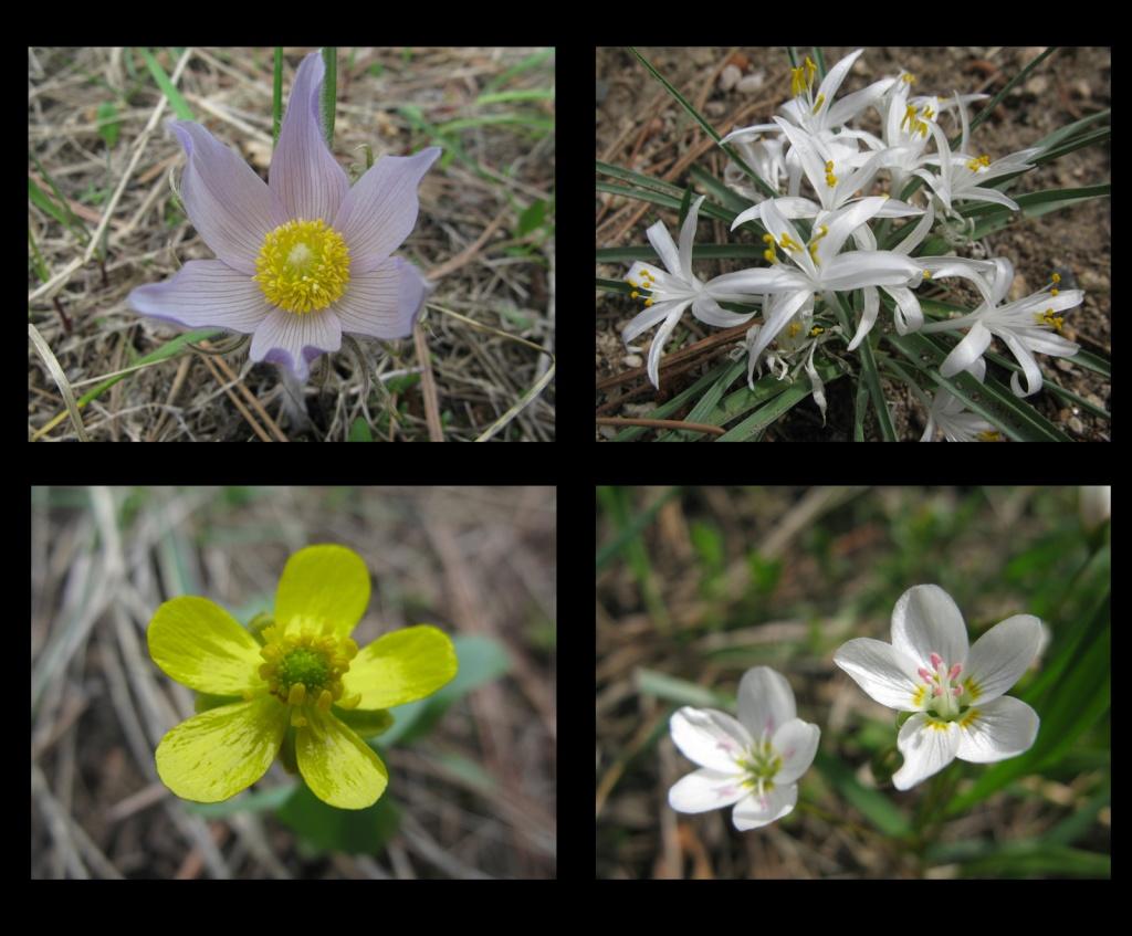 Wildflowers of Mosier Gulch!!