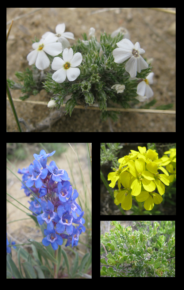 Rock Springs wildflowers!