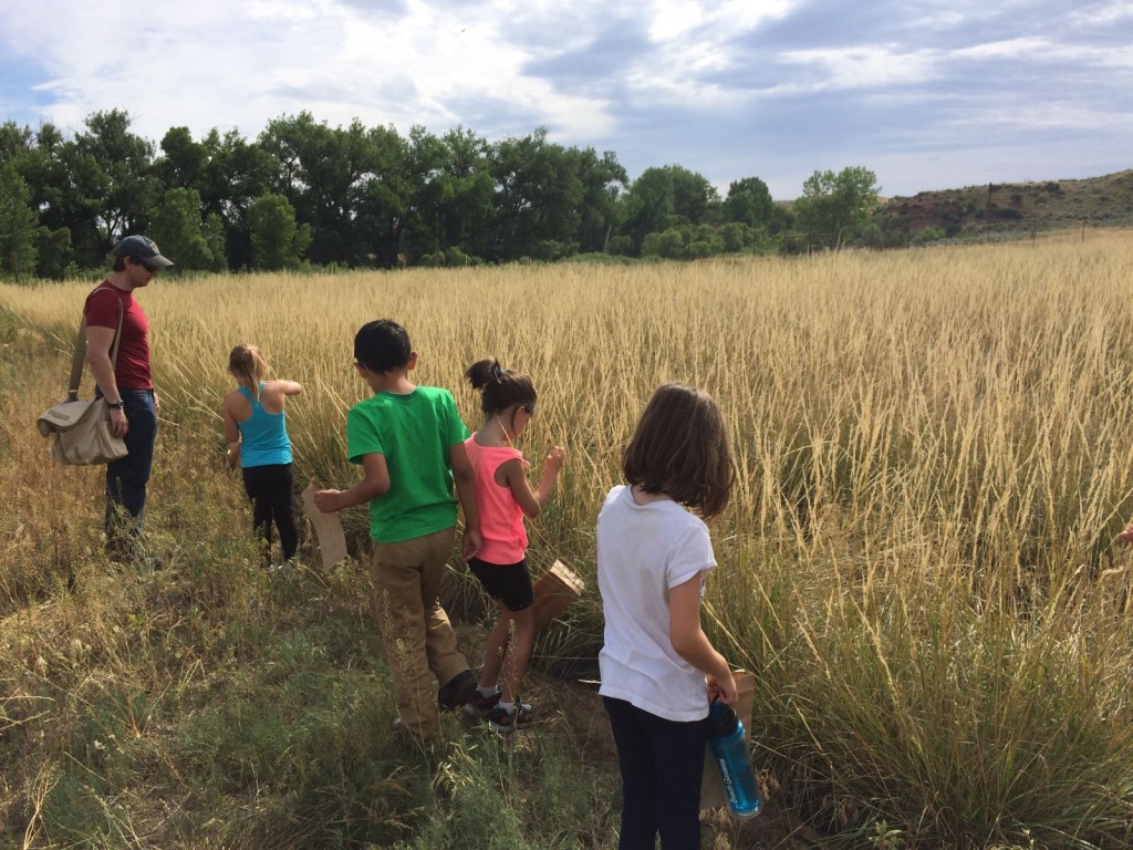 The kids collecting green needle grass seed.