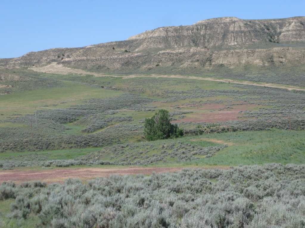 Cheatgrass turns a purplish red in mid June in Wyoming. I used remote sensing techniques to try to find the red signatures of the cheatgrass. The above picture shows you the difference between cheatgrass and other grasses in the landscape in June.