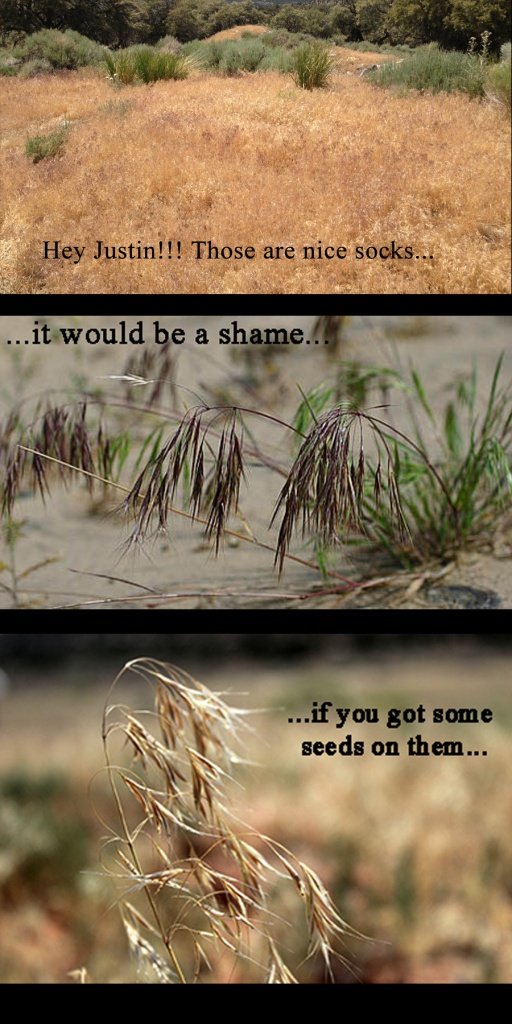 Cheatgrass Comic