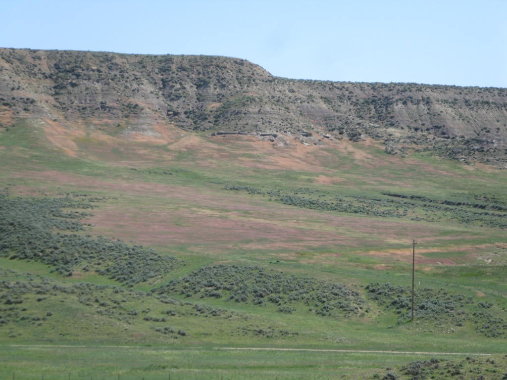 Can you find the cheatgrass?