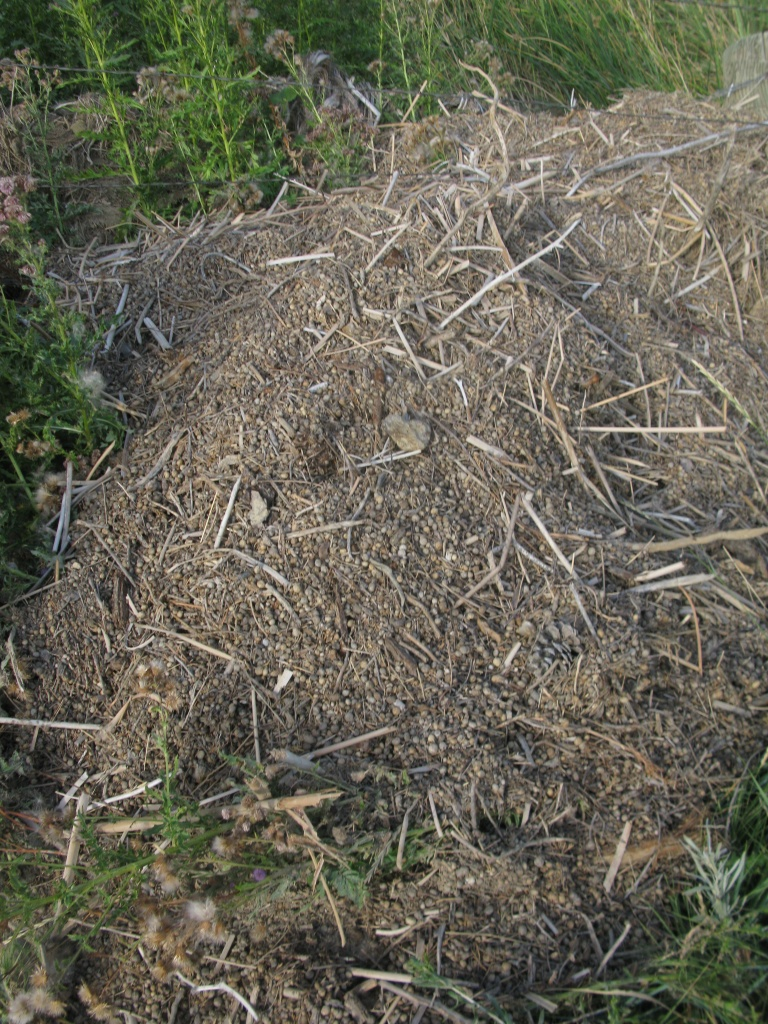Rabbit poo debris fields were very common in the draw...